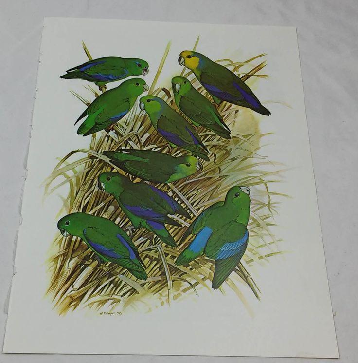 Parrotlets vogel afdrukken William Cooper (1972)-B100004 door DSOddsEnds op Etsy https://www.etsy.com/nl/listing/476554730/parrotlets-vogel-afdrukken-william
