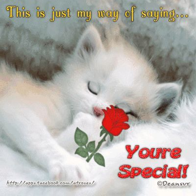 Image result for you are special cats images