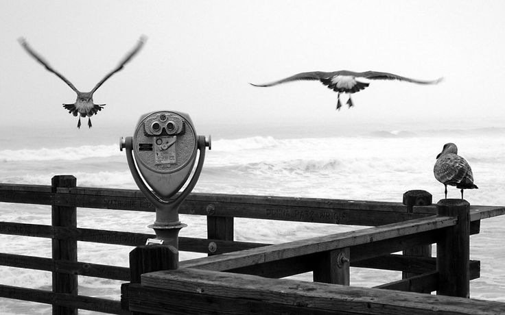 Birds by the beach  #LandscapeViewers #black&white #landscapes #photography