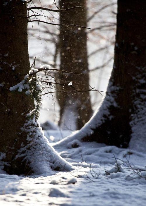 Invierno, nieve: