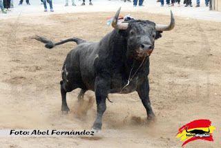 torodigital: Prosiguen los festejos taurinos en La Vall d'Uixó...