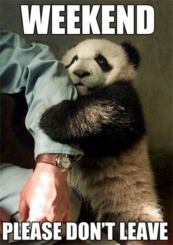 This is funny, but I pinned this mainly for the panda... and his cute little face!