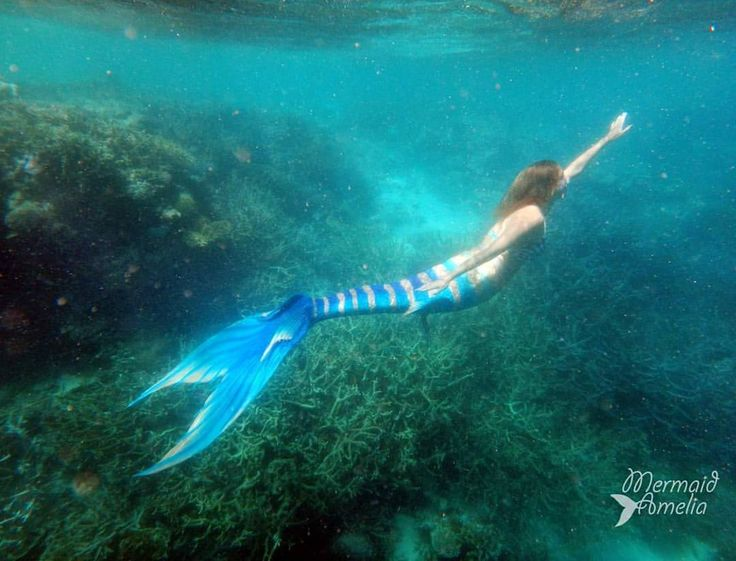 Swimming at the Great Barrier Reef was an incredible experience. #mermaids #mermaid #greatbarrierreef #finfolkmermaid #finfolk #australianmermaid #australianmermaids #perthmermaid #perthmermaids...