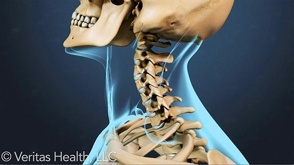While neck pain can be caused by conditions such as a herniated disc or cervical stenosis, it may also be the result of small injuries to the muscles, tendons, and ligaments of the cervical spine. Follow these 10 tips to protect your neck from the daily strains and injuries you're most susceptible to.
