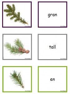 Träd i Sverige