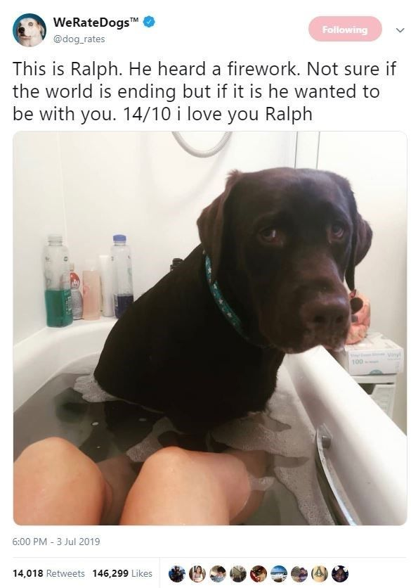 Submit Pictures To Dog Rates