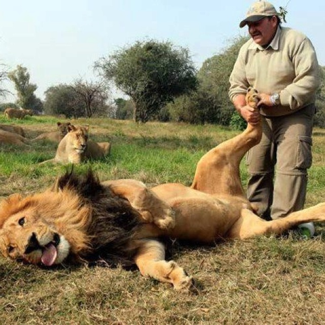 Everybody enjoys foot rubs! I guess it is the Leo in me.  Love this.