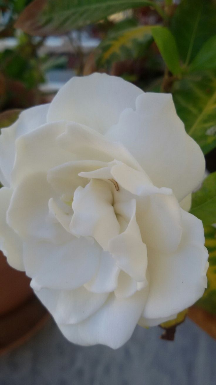 Πείτε αυτό που θέλετε με ένα λουλούδι!!!Τα λουλούδια κρύβουν μηνύματα... μας συναρπάζουν με τα χρώματα και τις μυρωδιές τους!!! Συμβολίζουν την αγνότητα,  την αισιοδοξία, την αθωότητα, την ωριμότητα, την ομορφιά, και χάρη!!!!!!!!! Θα πότιζα με τα δάκρια μου τα τριαντάφυλλα, για να νοιώσω τον πόνο από τ' αγκάθια τους και το κοκκινωπό φιλί των πετάλων τους…