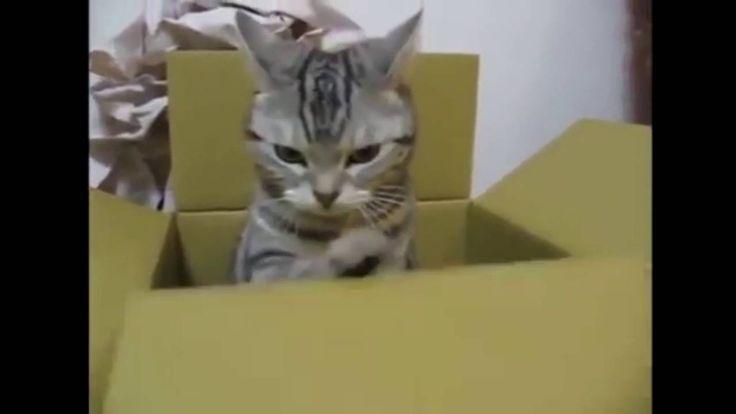 아무리봐도 고양이는 1도 모르겠다 - 웃긴 동물 영상