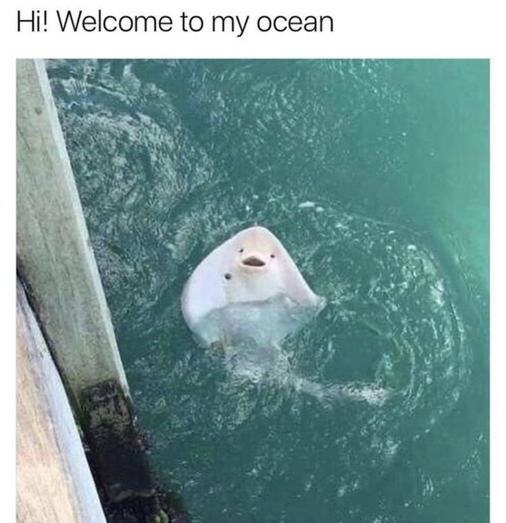 STING RAYS ARE SO CUTE. ONE TIME WHEN I WAS LITTLE WE WERE AT AN AQUARIUM AND I SAW A STING RAY AND I THOUGHT IT SMILED AT ME AND I WAS SO PLEASED WITH MYSELF