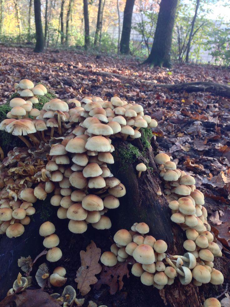 Again mushrooms