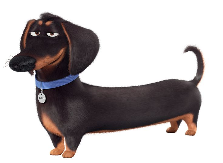 """Buddy from """"The Secret Life of Pets"""""""