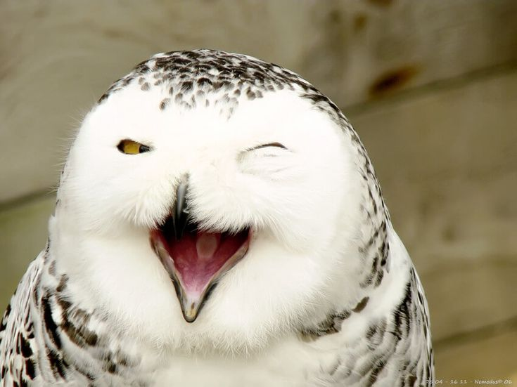 Funy Adorable Smiling Animals
