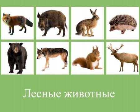 zwierzęta 3