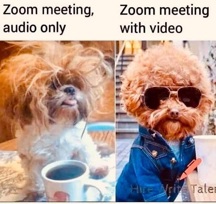 Funny Zoom Meeting Memes Meeting Memes Meetings Humor Funny Animal Jokes