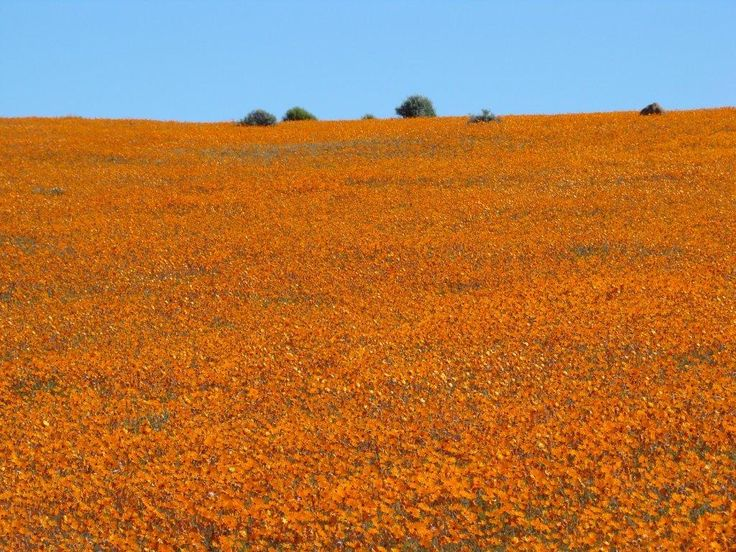 Namakwaland, Northern Cape, SA