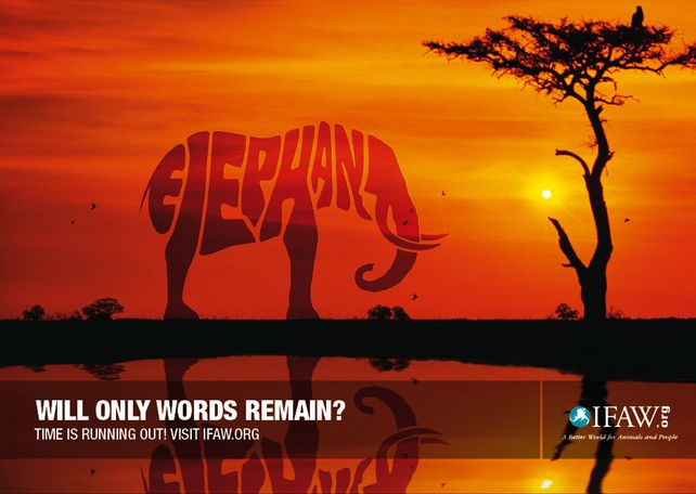 'Will only words remain?' for International Fund for Animal Welfare by RAPP. #globalwarming #elephant #savetheplanet #savetheanimals