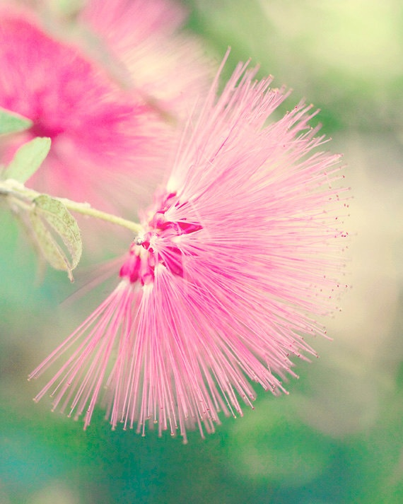 Flower Photography Pink 8x10 Spring By LifesSimpleMoments 2000