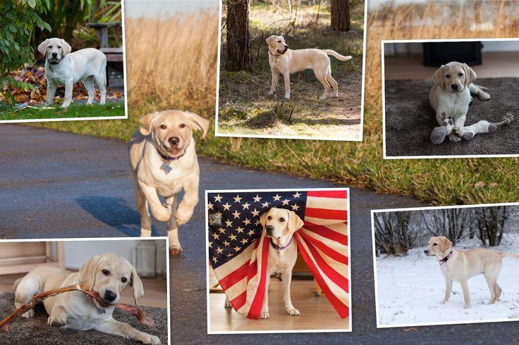 Collage van het eerste jaar