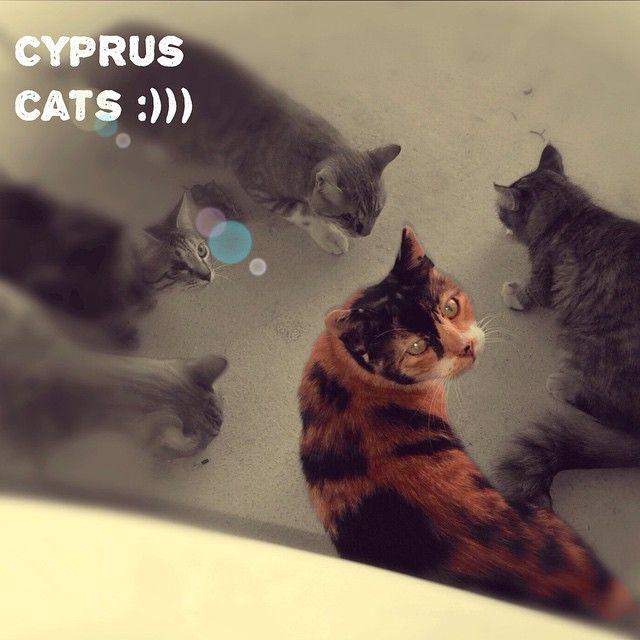 #Cyprus #green4city