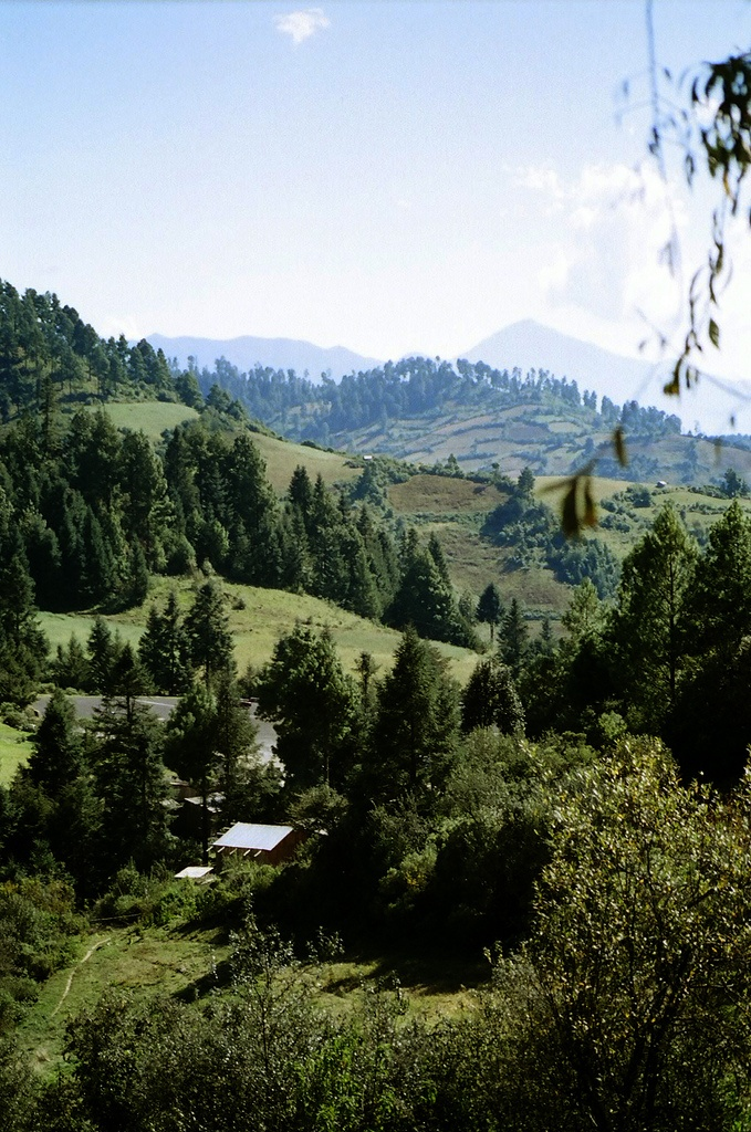 the mountains of Michoacan, near Angangeo
