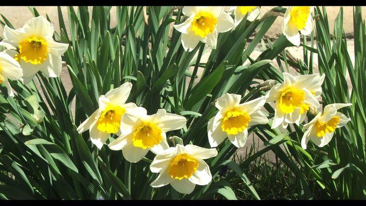 Tavaszi fény derűt áraszt