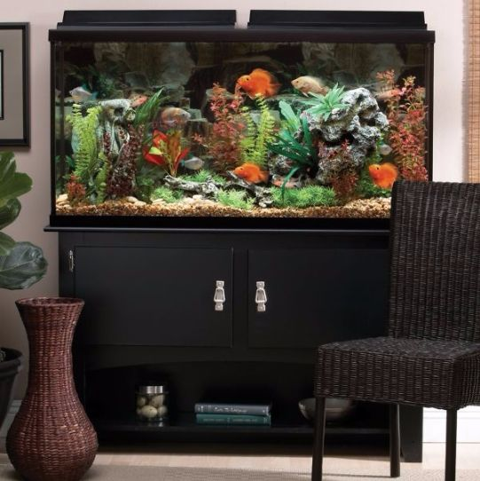Best 25 fish tank with stand ideas on pinterest for 20 gallon fish tank decoration ideas