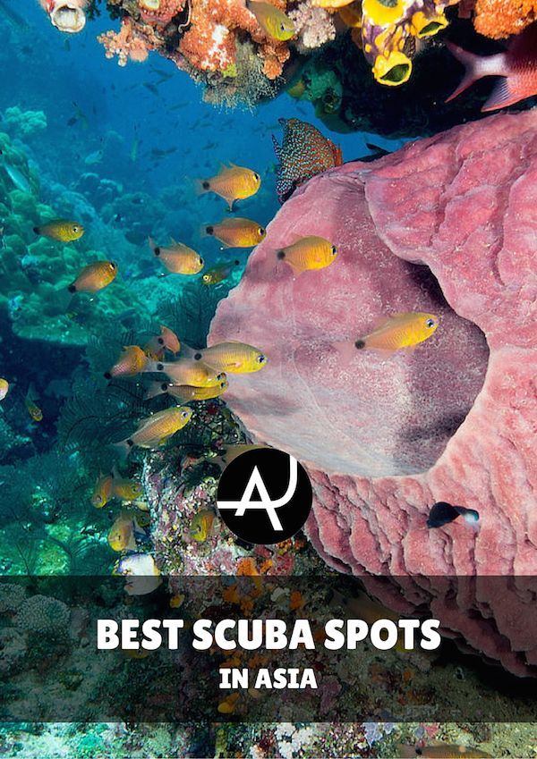 Best Diving Images On Pinterest Scuba Diving Coral Reefs - The 10 best scuba diving locations in the world