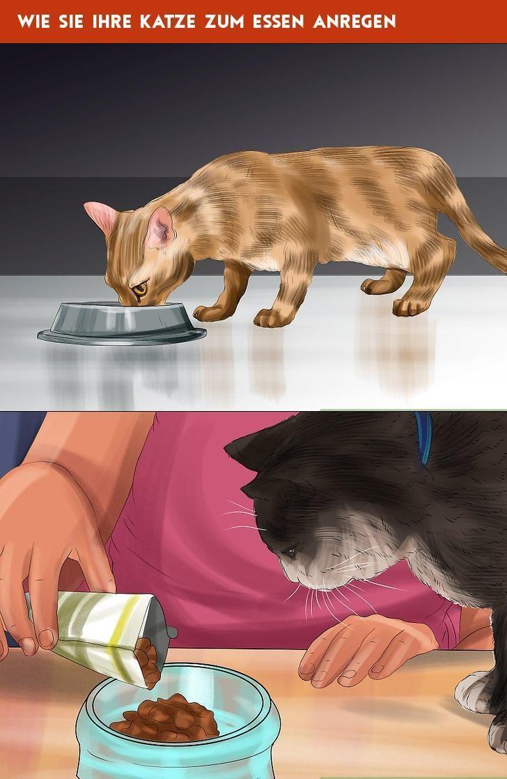 Wie Sie Ihre Katze Zum Essen Anregen
