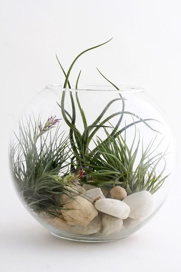 Prana Nyc Local Only Glazen Bokaal Plants Plant Decor Air Plants