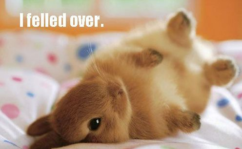 I Felled Over: Fluffy Bunnies, Cute Animal, Cute Baby, So Cute, Baby Bunnies, Baby Animal, Cutest Bunnies, Cute Bunnies, Bunnies Rolls