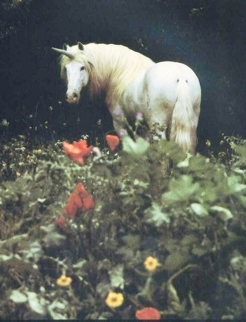 Unicorn. The most mystical of all elemental beings. Very sacred and wise
