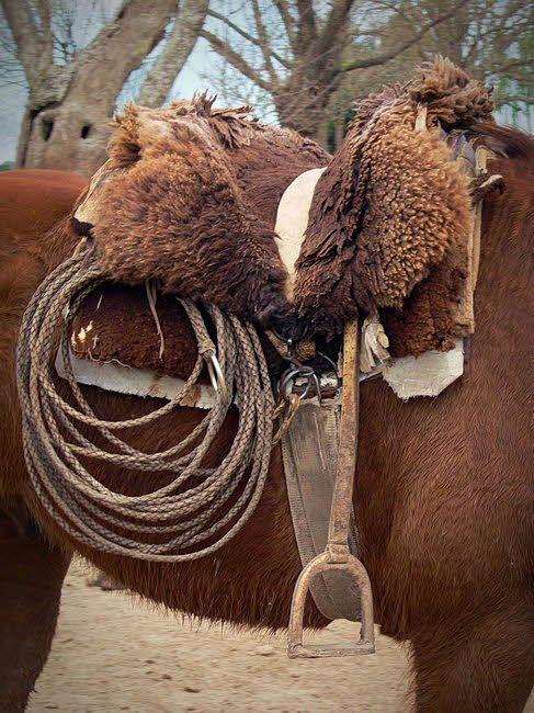 Gaucho Saddle  Estancia el Ombu, San Antonio de Areco, Argentina. Image of the Day Wed Jan 27, 2010