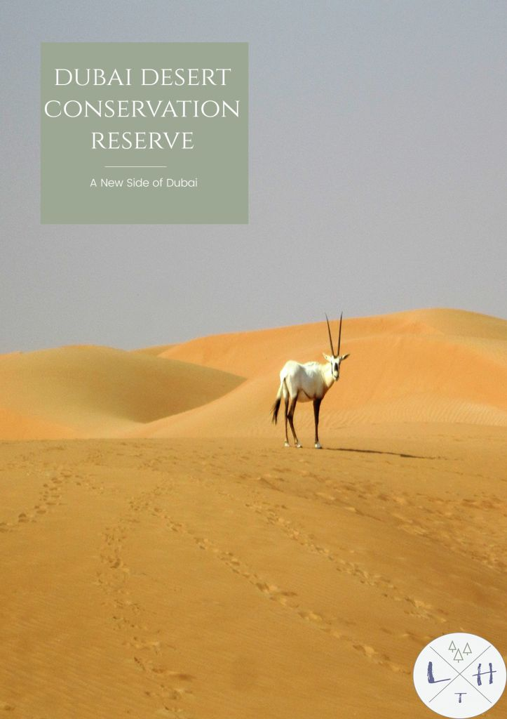 Wildlife drives, camel treks, breakfast in the company of falcons. Those are just few of many attractions waiting for you in Dubai Desert Conservation Reserve.