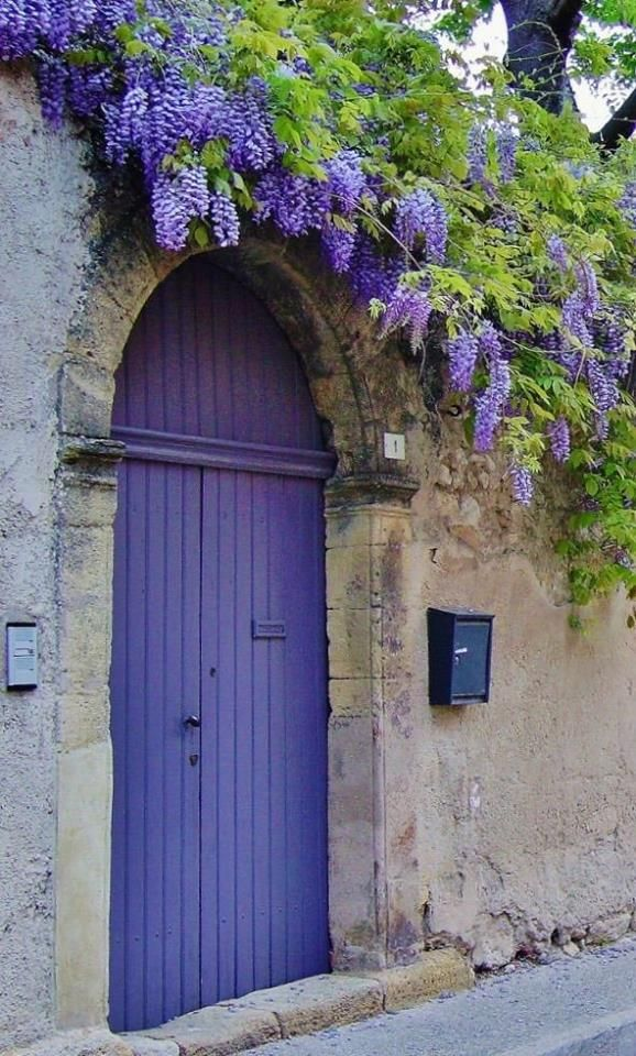 WISTERIA~ GLYCINE ~ long trailing branches of fragrant lavender blooms surround a lavender door in Provence.