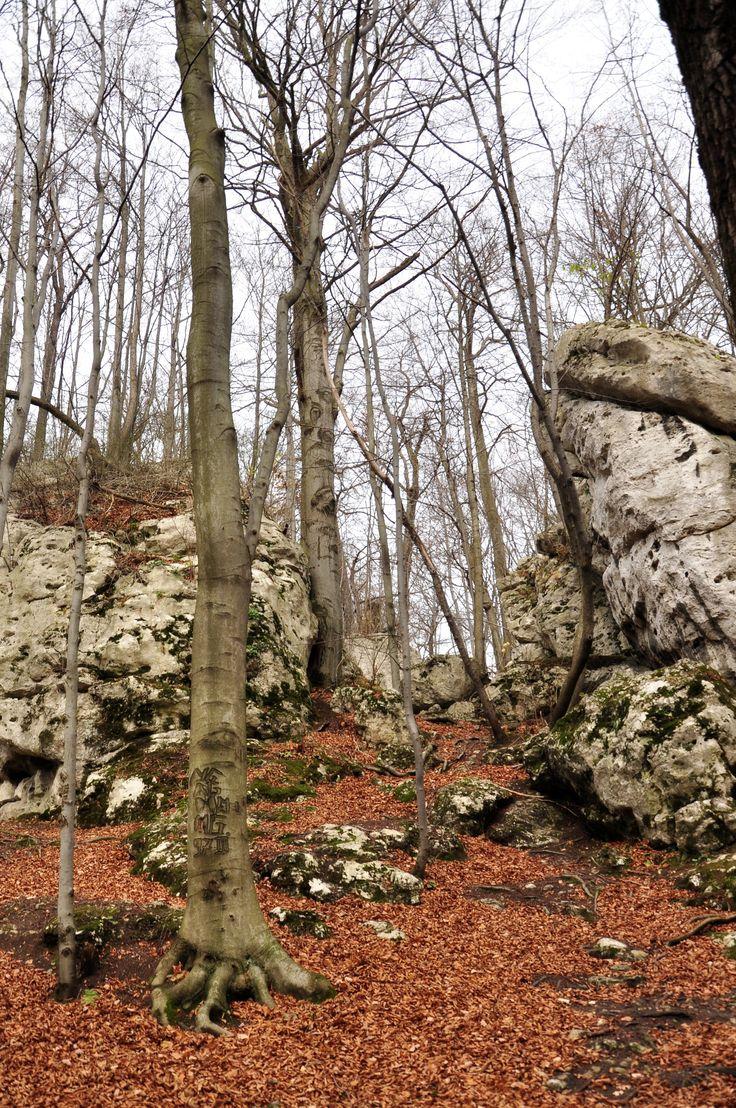 Jesienny las w Dolinie Wiercicy. Jura.