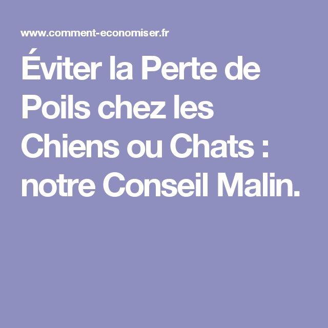 Éviter la Perte de Poils chez les Chiens ou Chats : notre Conseil Malin.