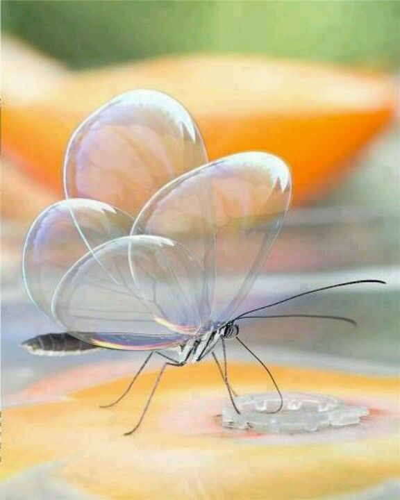 Translucent butterfly- the wings are made of glass or something? Such a beauty