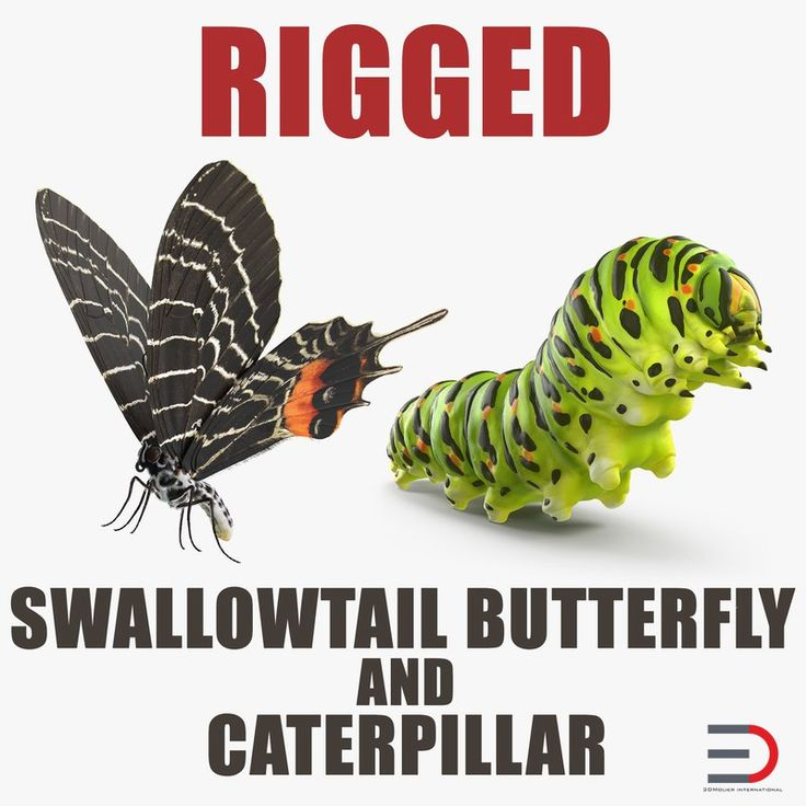 Swallowtail Butterfly and Caterpillar Rigged Collection model