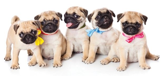 It's a Dog! How to Plan a Puppy Shower | Modern Dog magazine … don't forget to create a registry/wish list at your local pet shops!