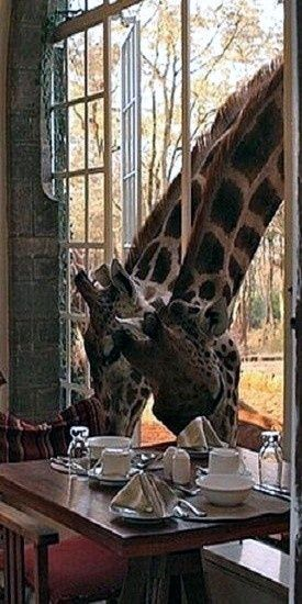 Breakfast ~ in Africa only