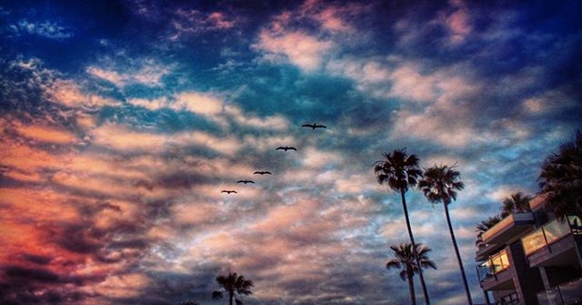 Find your tribe. Love them hard.💕 #O #flockofbirds #coldplay #love #lovelife #inspire #pelicans #bird #birds #sky #sun #ocean #faith #nature #sunset #sandiego #sunsetporn #calilove #explore #wanderlust #cloudporn #clouds #thankyoujesus #pink #palmtrees #teamcanon #blacklistrepublic #lajolla #love #windansea #sandiego #cloudgirlj #lajollalocals #sandiegoconnection #sdlocals - posted by cloudgirlj ⛅  https://www.instagram.com/jessmichelledlp. See more post on La Jolla at…