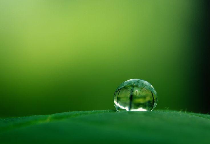 95808783.jpg (5379×3690)  Green