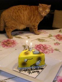 37 best Cat Birthday Party images on Pinterest Birthday party
