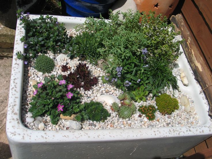 Sink garden, Alpine plants