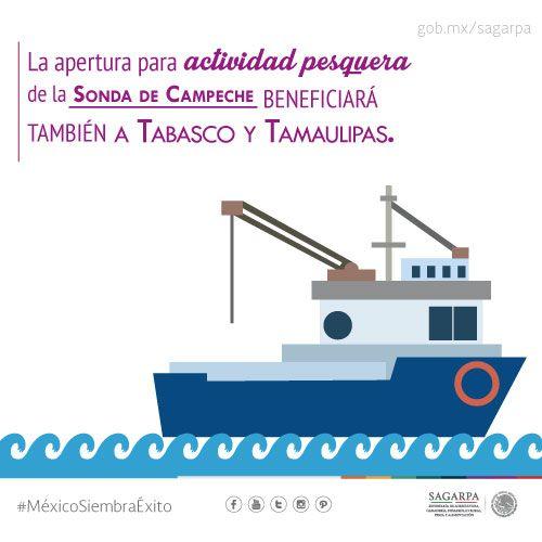 La apertura para actividad pesquera se la sonda de Campeche beneficiará también a Tabasco y Tamaulipas. SAGARPA SAGARPAMX #MéxicoSiembraÉxito