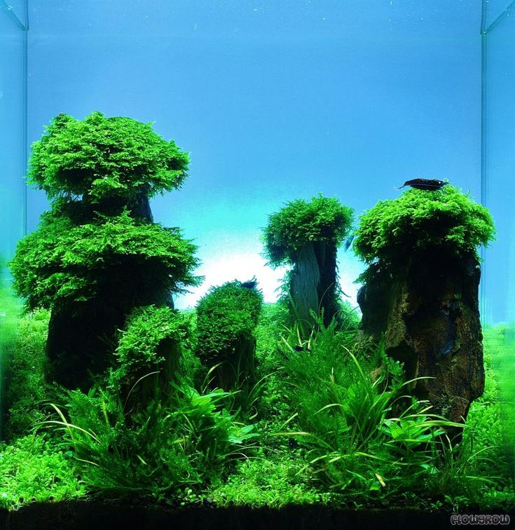 Freshwater Aquascape: 1000+ Ideas About Nano Aquarium On Pinterest