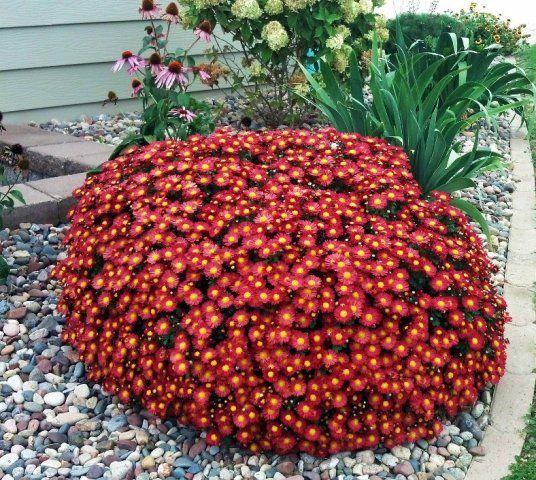 Perennial Garden Ideas Zone 4