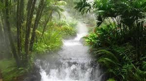 Resultado de imagen para fondos de paisajes en hd de la selva para portada