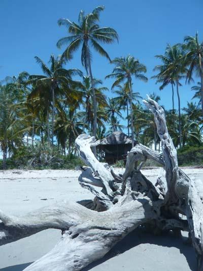 Beach  Saadani Park, Tanzania